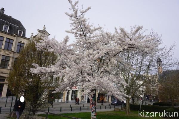 ブリュッセル半日観光で見た桜は満開